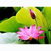 Nhạc Phật Giáo - Hoàng Duy