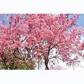 những bài hát hay về mùa xuân