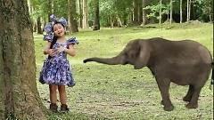 Video Chú Voi Con Ở Bản Đôn - Bé Ngọc Ngân