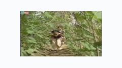 Video Tại Sao - Ngô Quỳnh Anh