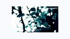 Morning Star (Orchestral Version) - Roger Shah,Moya Brennan