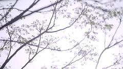 Video MAGIC - La Chí Tường
