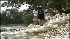 Video Vịt Lội Trong Ao - Duy Uyên