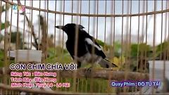 Con Chim Chìa Vôi - Bảo Hưng