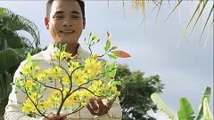 Nhành Mai Xuân - Khang Chấn Thi