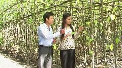 Video Hoa Cau Vườn Trầu - Anh Dũng