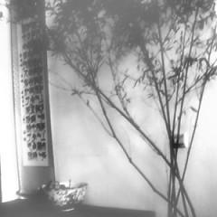Album 水先后古清风乐/ Thủy Tiên Hậu Cổ Thanh Phong Nhạc - Đậu Duy