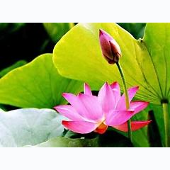Nhạc Phật Giáo - Hoàng Duy -