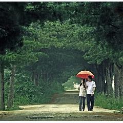 Playlist Album những bài hát về mưa hay nhất -
