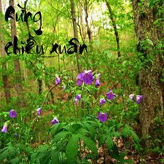 Rừng Chiều Xuân - Various Artists