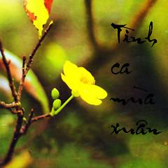 Tình Ca Mùa Xuân (Tôn Thất Lập) - Various Artists