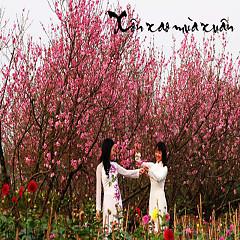 Album Xôn Xao Mùa Xuân - Various Artists