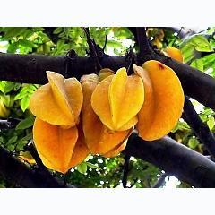 Quê hương là chùm khế ngọt, Cho con trèo hái mỗi ngày, Quê hương là đường đi học, Con về rợp bướm vàng bay............! -