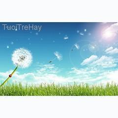 Playlist TuoiTreHay.Com -