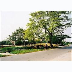 saotinhyeu Quốc Nam Định Đồng Quê -