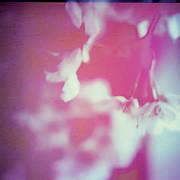 Cherry Trees - Kirito