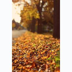 Bốn mùa thay lá -