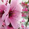Bài hát Mùa Xuân Đến Rồi Đó - Lê Dung