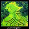 Bài hát Hoa Tím Biển - Thanh Hằng
