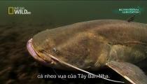 Monster Fish - Loạt Phim về Cá Khổng Lồ - Tập 1 - Alien Catfish - Cá Nheo Ngoại Lai