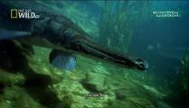 Monster Fish - Loạt Phim về Cá Khổng Lồ - Tập 2 - Alligator Gar - Cá Sấu Nhái
