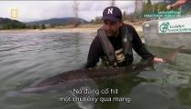 Monster Fish - Loạt Phim về Cá Khổng Lồ - Tập 11 - Great White Sturgeon - Cá Tầm Khổng Lồ