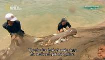 Monster Fish - Loạt Phim về Cá Khổng Lồ - Tập 13 - Mega Fish - Cá Khổng Lồ