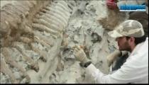 Mexico phát hiện xương khủng long hiếm -