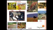 Môn Địa Lý - Zuni.vn - Địa Lý Các Ngành KT: Một Số Vấn Đề PT Và Phân Bố NN Nước Ta - Vấn Đề Phát Triển Nông Nghệp