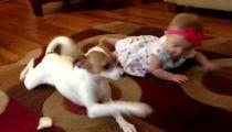 Chú chó dạy cô chủ bò -