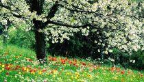 Kỳ Số 21 - Thì Thầm Mùa Xuân -