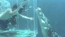 Bơi cùng cá sấu khổng lồ -