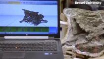 Cận cảnh xương khủng long nặng 65 tấn -