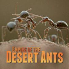 Empire of the Desert Ants (Đế Chế Của Loài Kiến Sa Mạc)