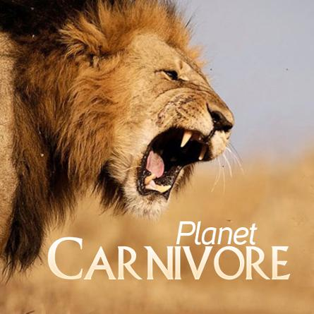Động Vật Ăn Thịt Trên Trái Đất - Planet Carnivore