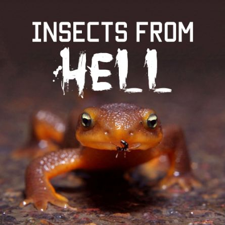 Insects From Hell